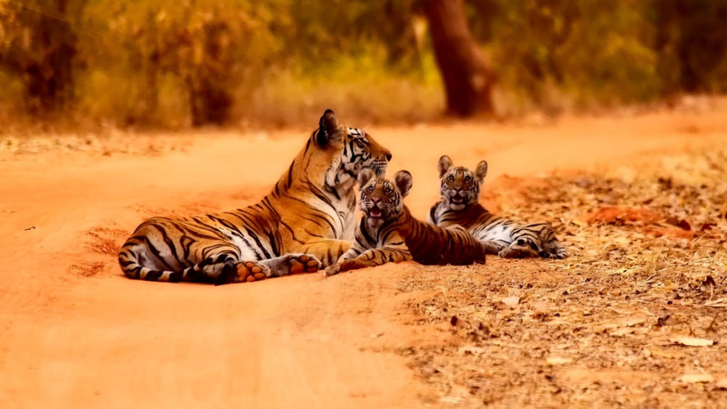 Best Jungle Safari Destinations India