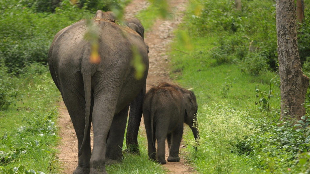 Periyar National Park Wildlife Sanctuary