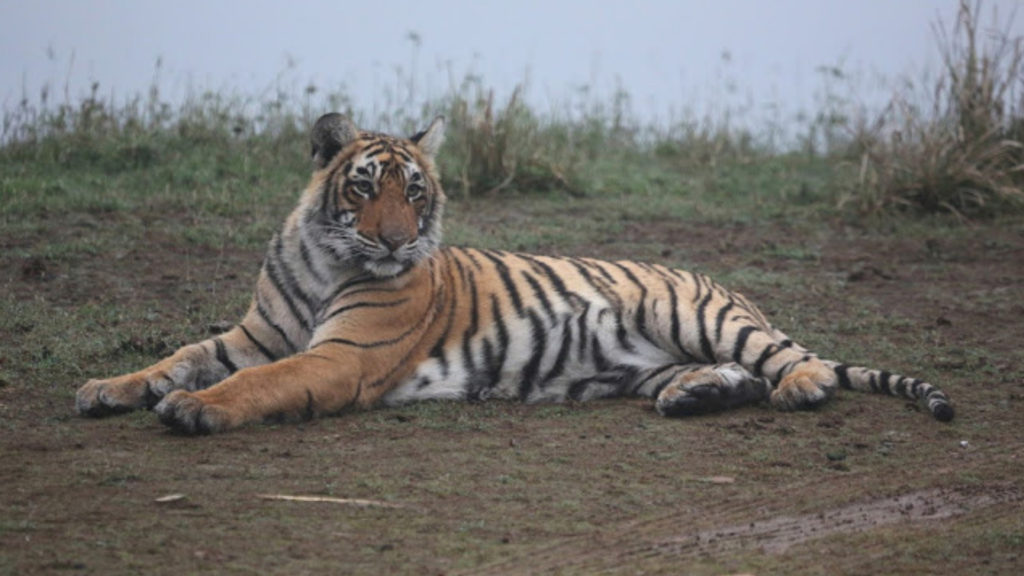 Ranthambore National Park Tiger Reserve